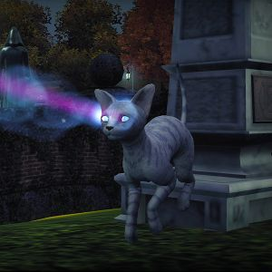 The Sim  Cats And Dogs Mac Download Fre